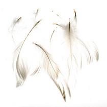 Перья белые малые, 5 штук
