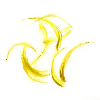 Перья ярко-желтые малые