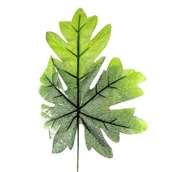 Лист клена зелено-салатовый 20х23 см