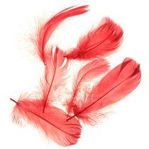 Перья красные большие