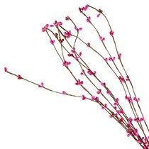 Декоративная веточка Котики, цвет малиновый