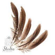 Перья фазана коричневые, 5 штук