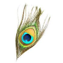Перо глаз Павлина натуральное
