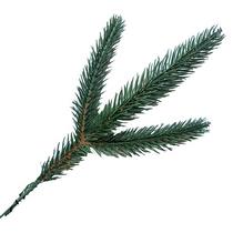 Еловая веточка зеленая №2, 17 см