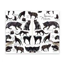 """Блокнот для графики и письма Classic Foxandowl """"Черные кошки"""" А6, 100г/м2, 32л., MAXGOODZ"""