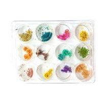 Набор из 12-ти сухоцветов в пластиковых баночках