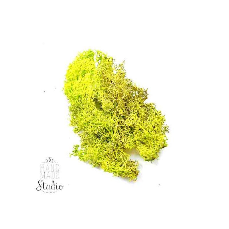 Мох натуральний стабілізований №1, колір салатовий, 10 г