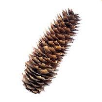 Шишка натуральная еловая средняя 8-9 см, 1 штука