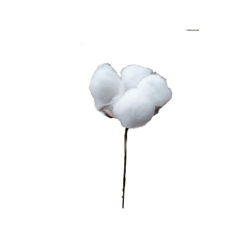 Коробочка Хлопка декоративная на ножке, 15-20 см