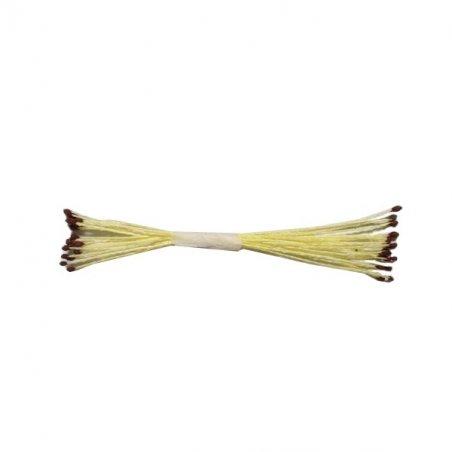 Квіткові тичинки жовті з коричневими кінцями, №21