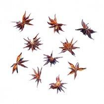 Звездочка бадьяна (аниса), 2-3 см, 1 штука