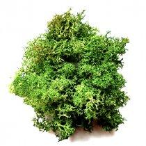 Мох натуральный Стабилизированный, цвет оливковый,10 г
