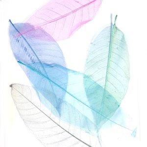 """Набор скелетированных листьев Магнолии """"Микс Ассорти"""", 5 штук (18-20 см)"""