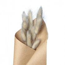 Сухоцвет Лагурус (Заячьи хвостики), цвет серый,10 штук