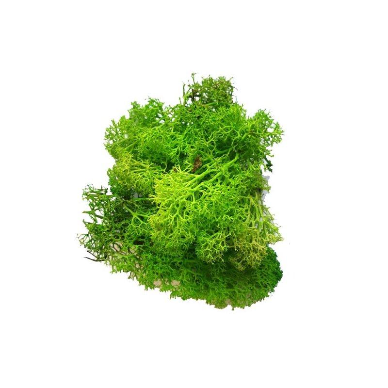 Мох натуральный стабилизированный, цвет зеленый,10 г