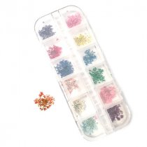Набор из 12-ти сухоцветов в пластиковом контейнере №3