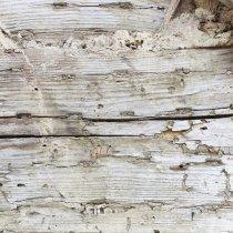 Виниловый безбликовый фотофон Дерево №37, 50*50 см