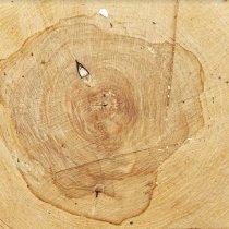 Виниловый безбликовый фотофон Дерево №40, 50*50 см
