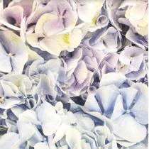 Виниловый безбликовый фотофон Цветы №3, 50*50 см