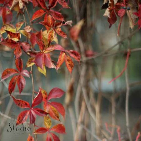 Виниловый безбликовый фотофон Бумага, цвет крафт, 50*50 см