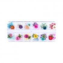 Набор из 12-ти сухоцветов в пластиковом контейнере №1