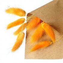 Сухоцвет Лагурус (Заячьи хвостики), цвет оранжевый,10 штук