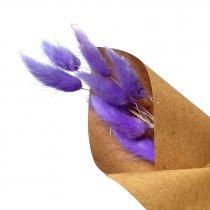 Сухоцвет Лагурус (Заячьи хвостики), цвет фиолетовый,10 штук