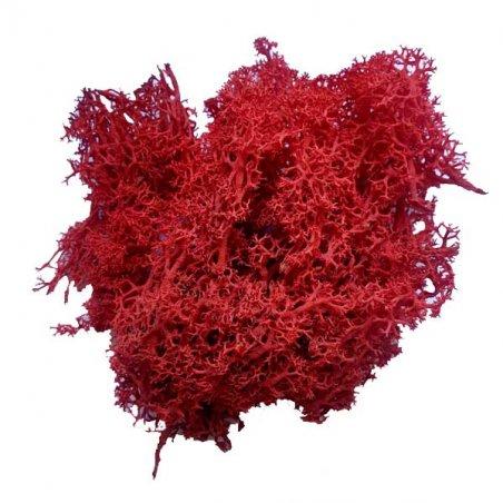 Мох натуральный стабилизированный, цвет красный,10 г