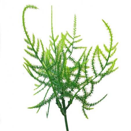 """Искусственная зелень """"Пик аспарагуса"""", цвет зеленый, 25 см"""