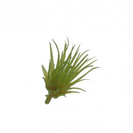 Суккулент с острыми листьями, 5 см