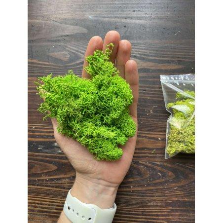 Мох натуральный стабилизированный, цвет салатовый,10 г