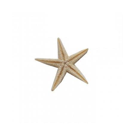 Морская звезда 10-20 мм, 3 штуки